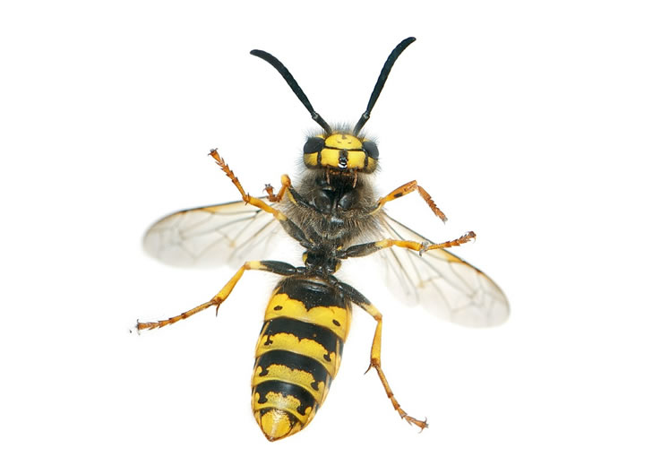 Wasp Control Partington 24/7, same day service, fixed price no extra!